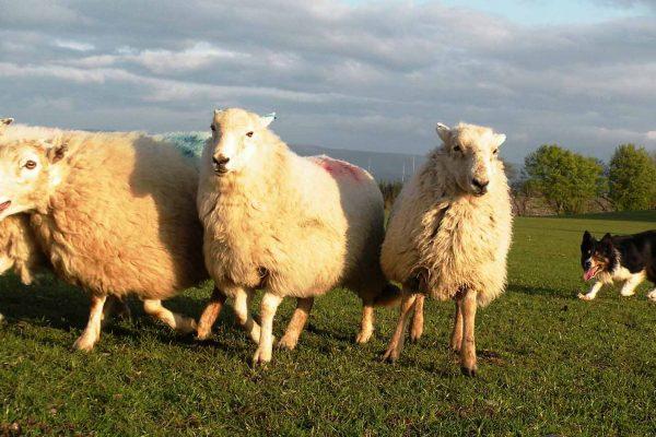 workshop-schapendrijven-events-company-3